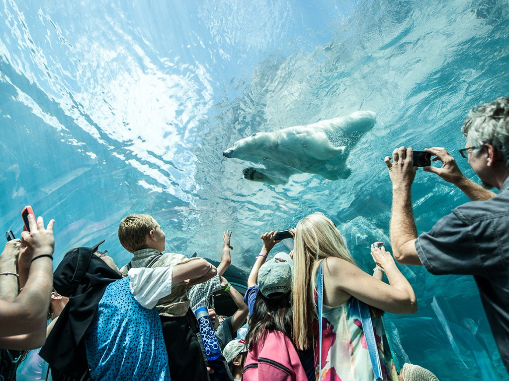IN THE PEG? STOP AT THE ZOO TO SEE PLAYFUL POLAR BEARS FROM CHURCHILL / PHOTO: ASSINIBOINE PARK ZOO
